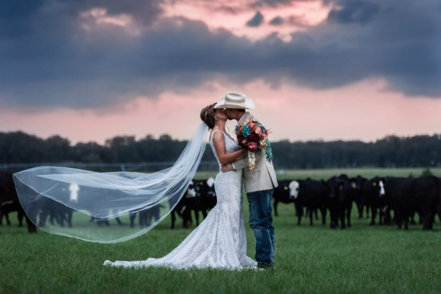 Farm Wedding North Florida Sunset with Cows
