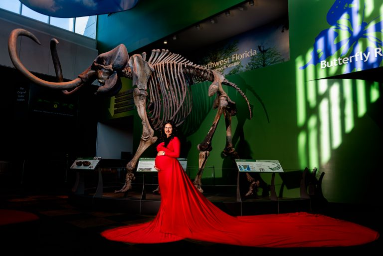 Maternity photography session at the University of Florida's Museum of Natural History Mammoth